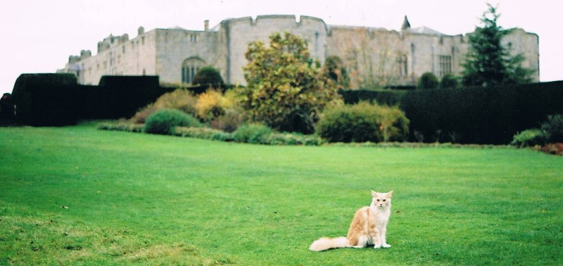 cat and chirk castle